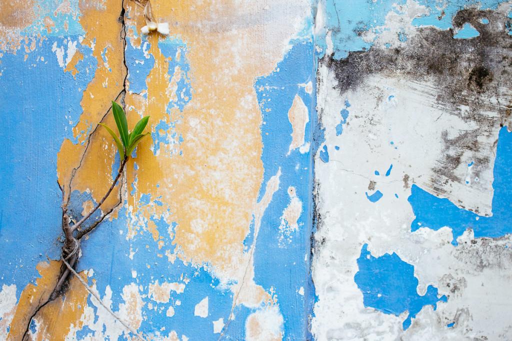 kleine Pflanze wächst aus Riss in verwitterter Wand mit Farbe in blau, gelb und weiss