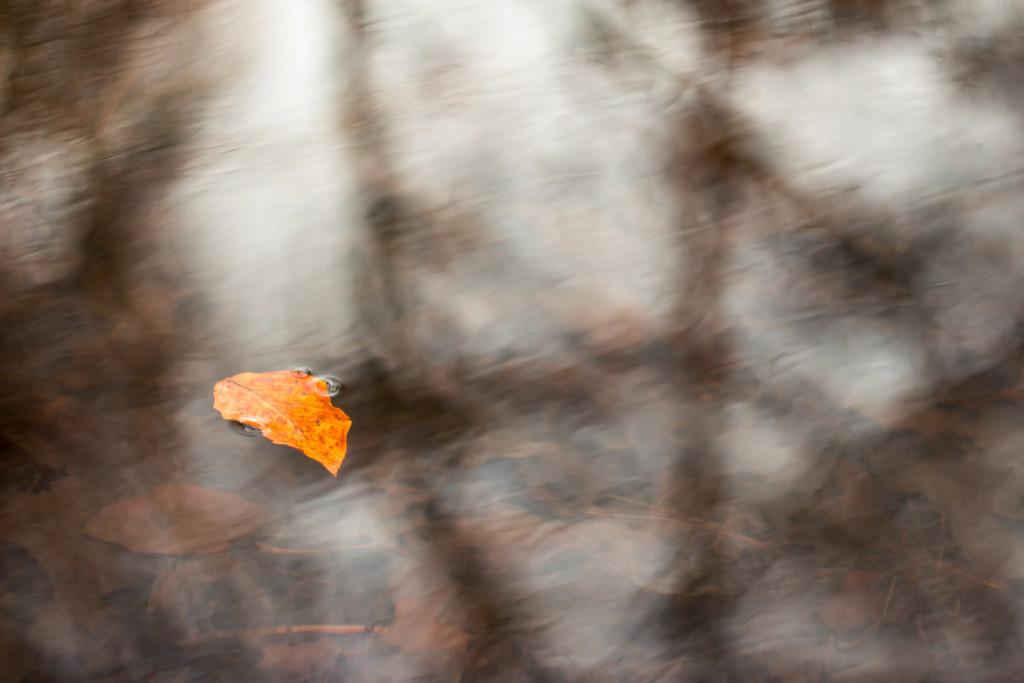 oranges Blatt auf Wasseroberfläche in braunen und weissen Schattierungen