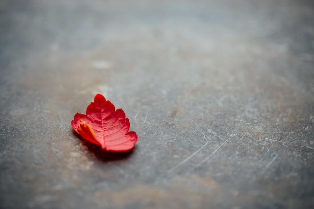 kleines rotes Blatt auf grauem Stein