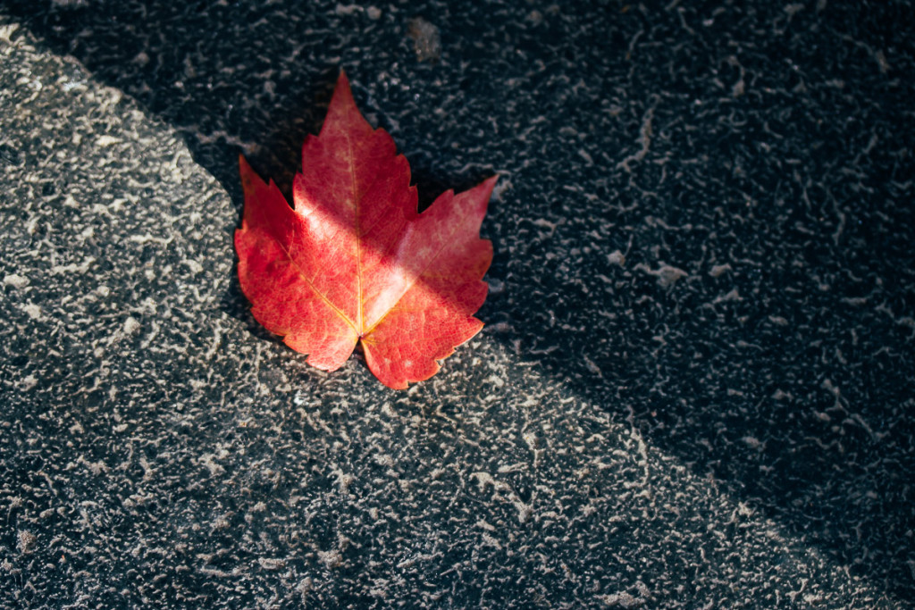 red leaf on black and white stone with diagonal split in light and shadow