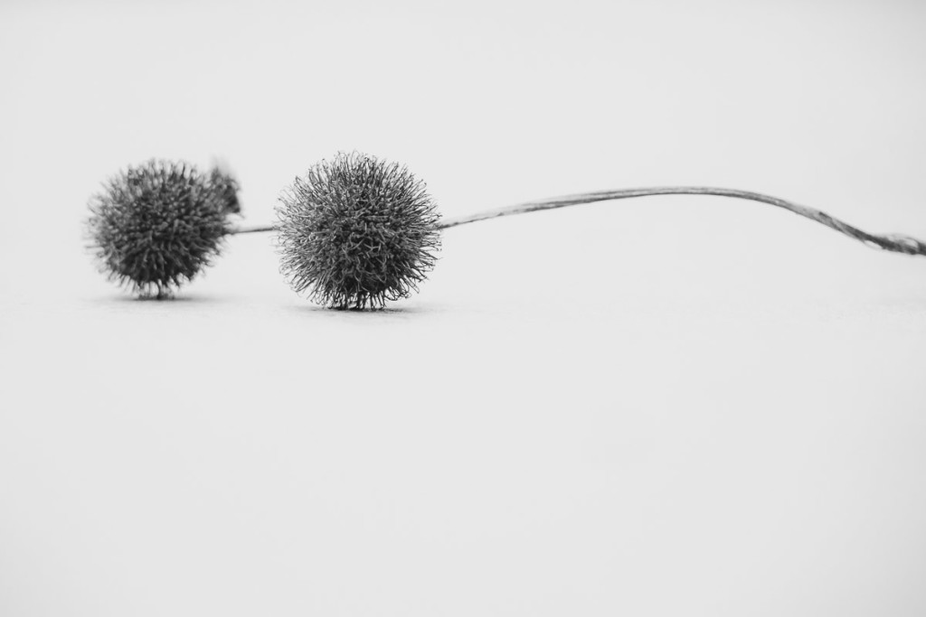 Two connected plane tree capsules on white background
