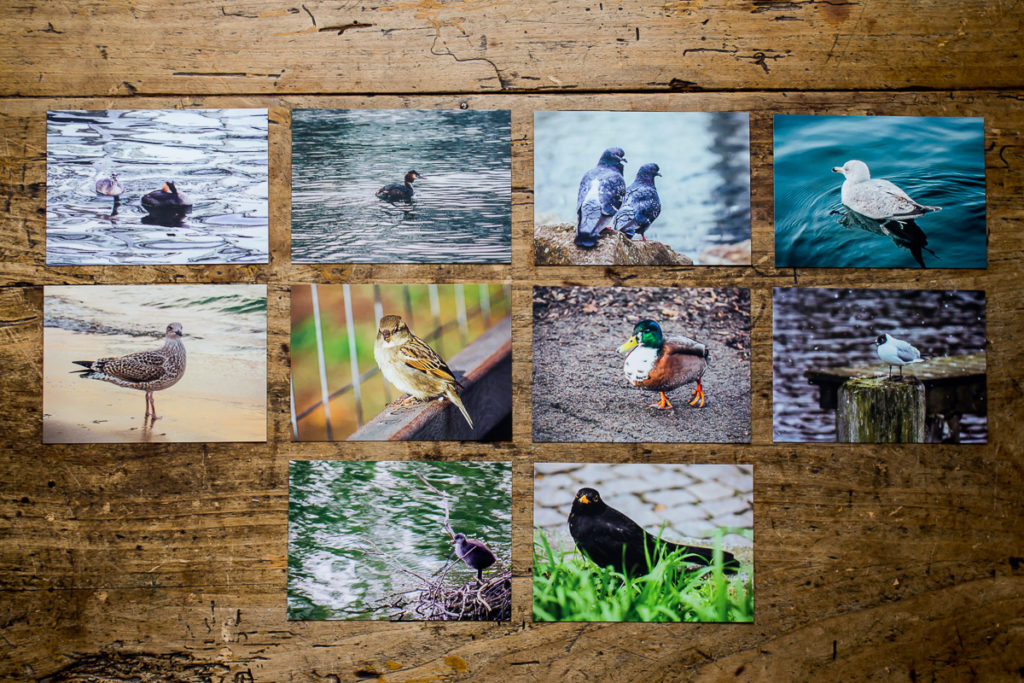 10 postcards with images of birds