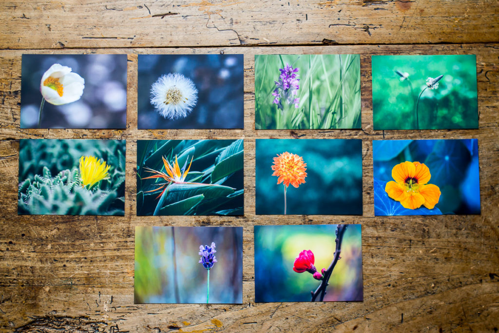 10 postcards with images of flowers