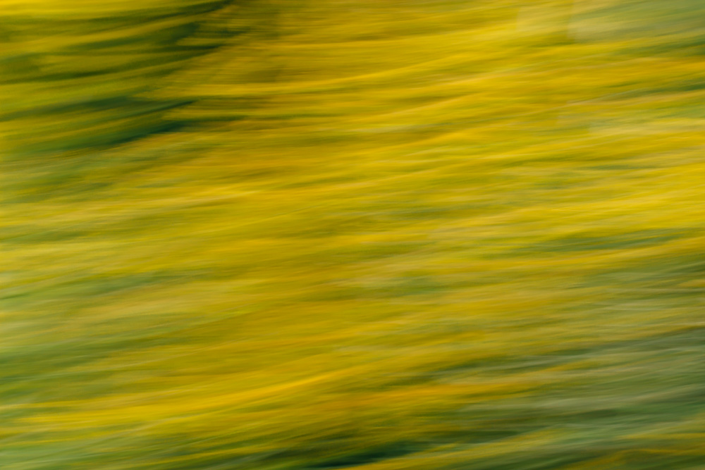 Abstract image of goldenrod flower heads in shades of yellow and green