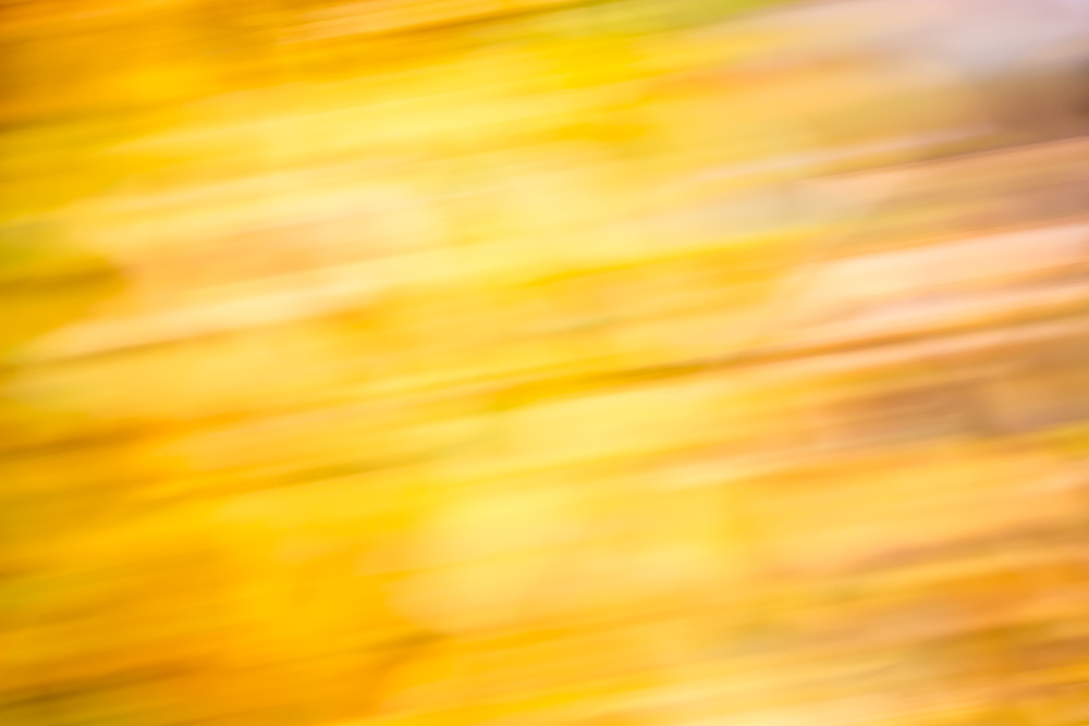 Abstract image of autumn leaves in shades of yellow, orange and white