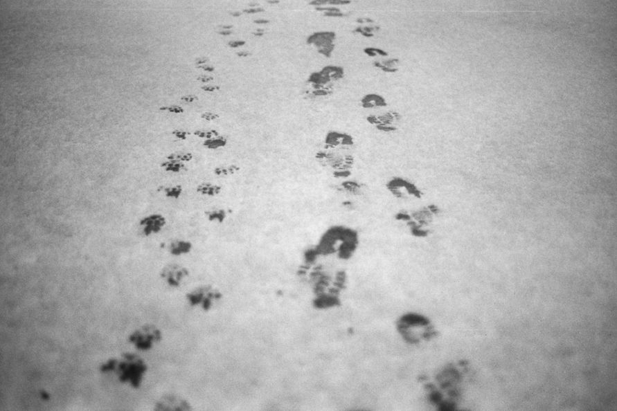 Abdrücke von Schuhsohlen und Hundepfoten im Schnee auf einer gefrorenen Pfütze