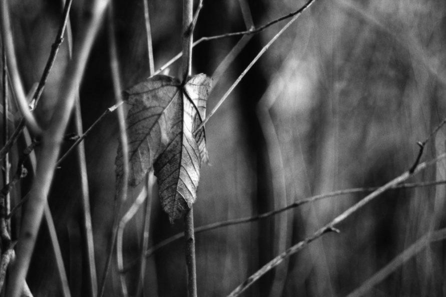 Einzelnes Blatt zwischen kahlen Zweigen